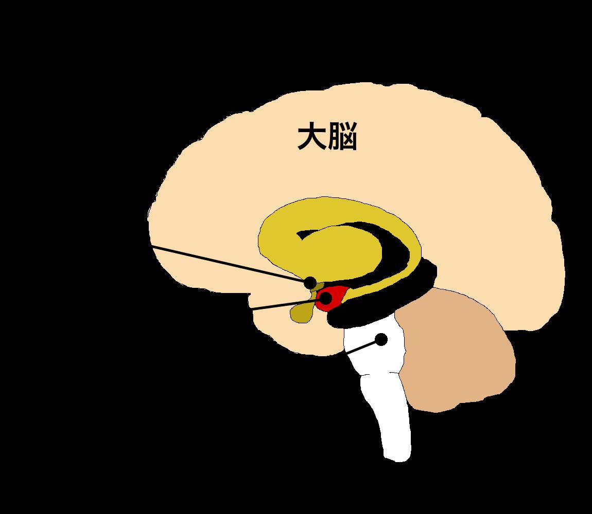 パニック障害の脳部位