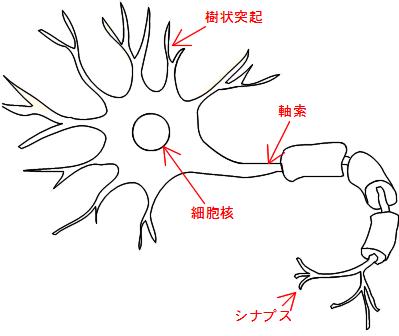 神経細胞 ニューロン